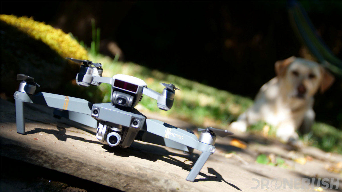 Pup and drones DJI Mavic Pro and Spark with Kenzie